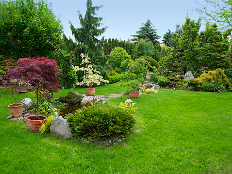 Beautiful manicured garden with bushes, trees, stones, pond, juicy grass