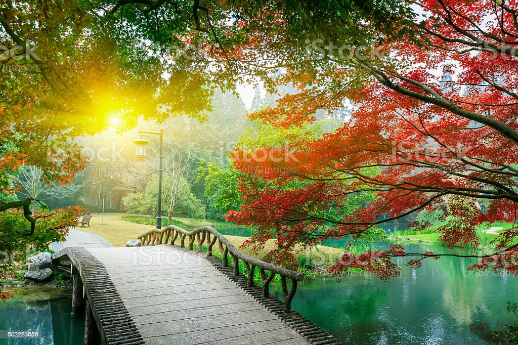 Beautiful maple leaves and Small bridge in the Chinese garden stock photo