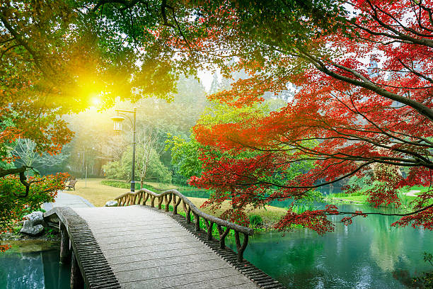 beautiful maple leaves and small bridge in the chinese garden - walkway and bridge stock photos and pictures