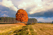 Beautiful maple tree  on bright evening sun at sunset against blue sky with clouds. Golden Autumn Landscape.