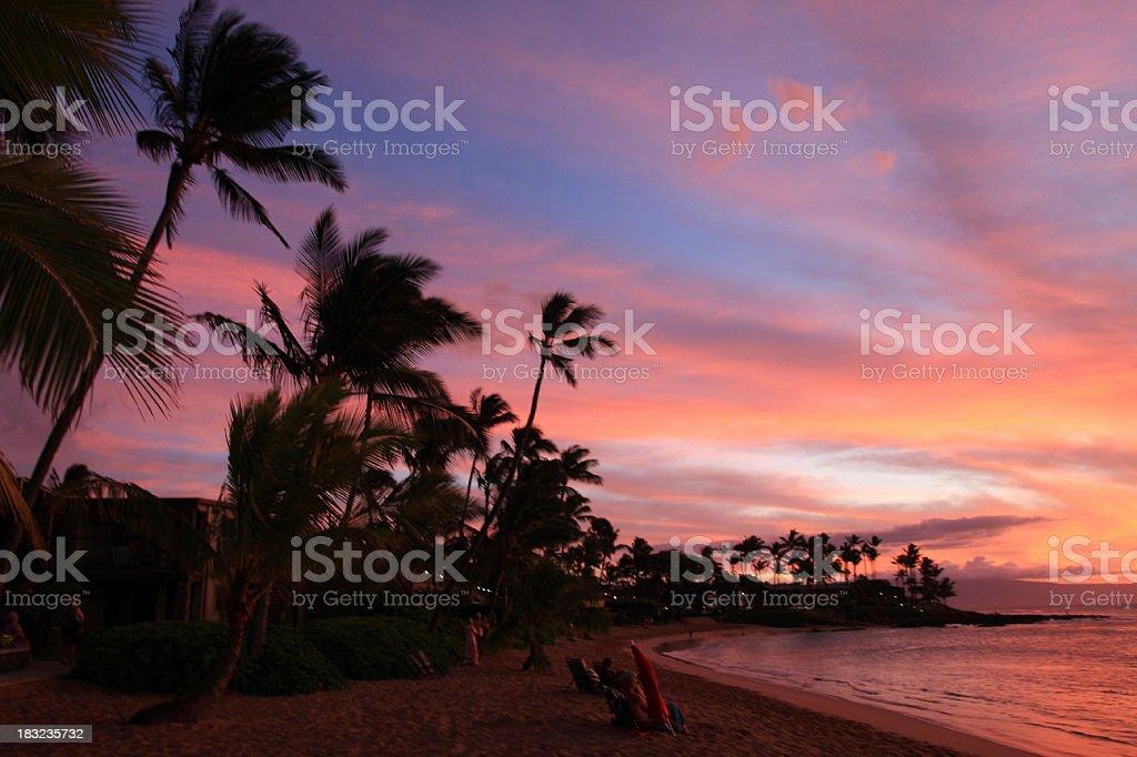Beautiful Maui Hawaii Beach Ocean Resort Hotel Palm Tree