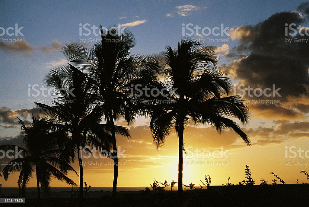 Beautiful Maui Hawaii beach Pacific ocean Palm tree sunset stock photo