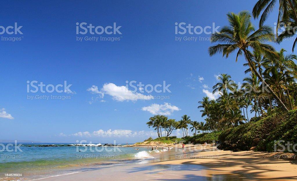 Beautiful Maui Hawaii palm tree resort beach stock photo