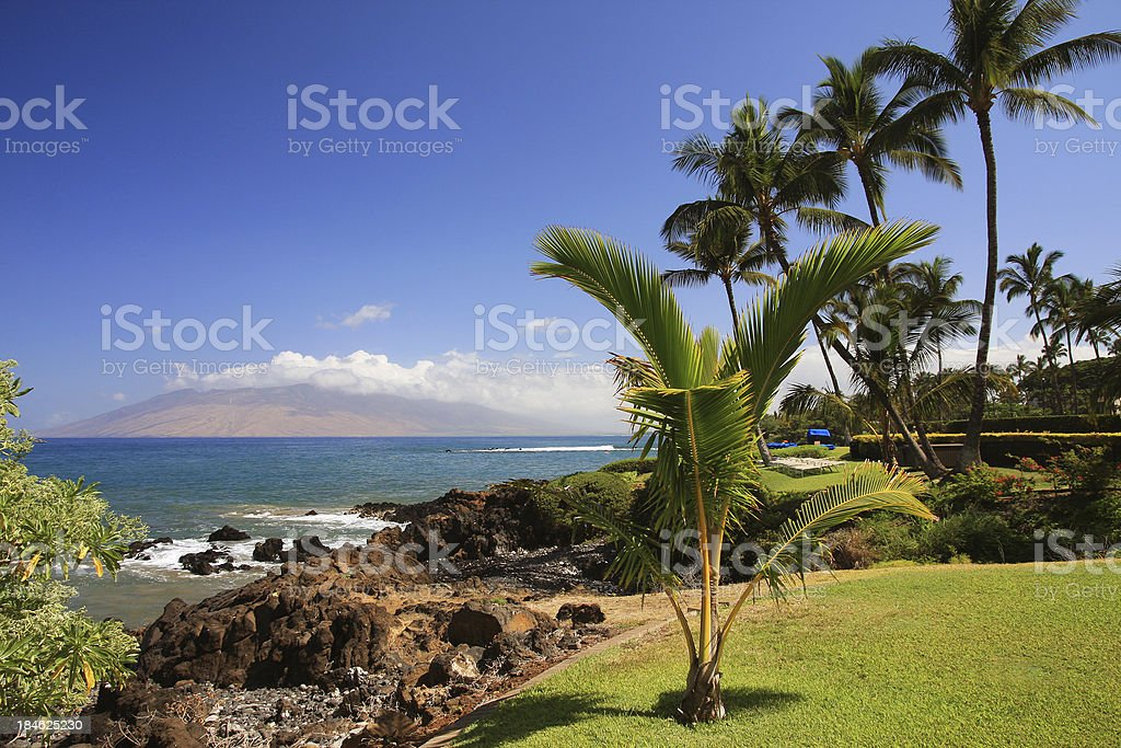 Beautiful Maui Hawaii palm tree resort ocean front stock photo