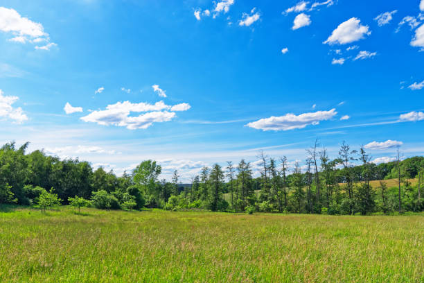 Beautiful meadow against blue sky in Luneburger Heath stock photo