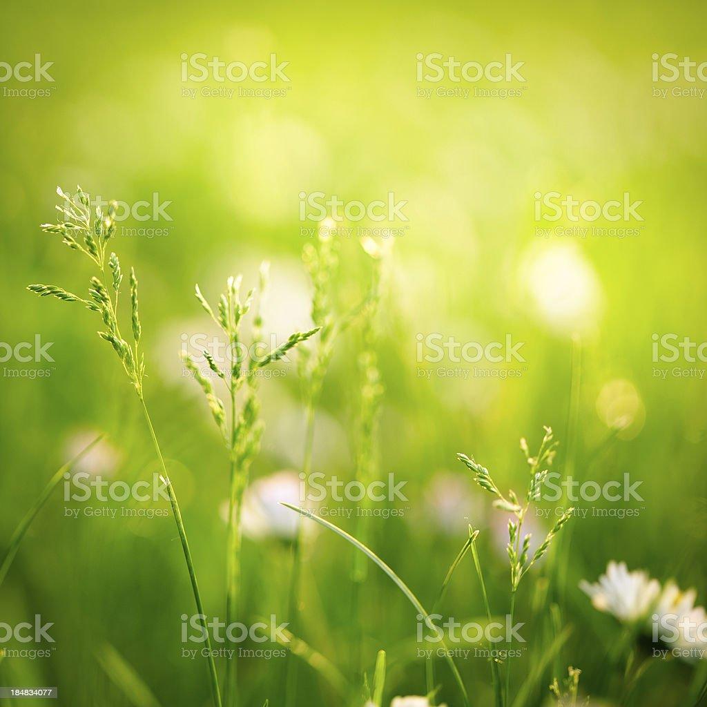 Beautiful meadow royalty-free stock photo