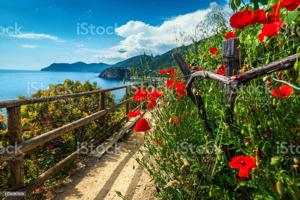 Beautiful mediterranean gardens with colorful flowers, Manarola, Liguria, Italy, Europe Spectacular hiking trails with flowers and red poppies in Cinque Terre National Park, near Manarola village, Liguria, Italy, Europe Bay of Water Stock Photo