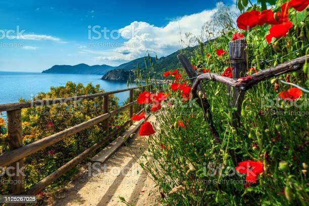 Beautiful Mediterranean Gardens With Colorful Flowers Manarola Liguria Italy Europe Stock Photo - Download Image Now
