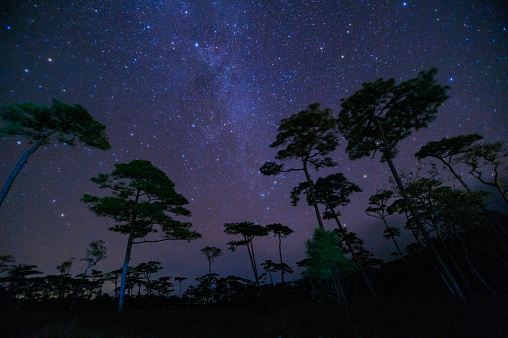 istock beautiful milky way across over the sky  in tropical forest on top of the mountain at northern of Thailand photo has gain & noise 1272080943