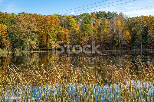 Beautiful Minnesota lake in fall, with trees, lily pads, and reeds on a sunny autumn day. Taken in Marine on St Croix MN