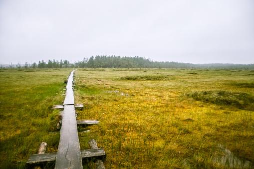 A beautiful mire landscape in Finland - dreamy, foggy look