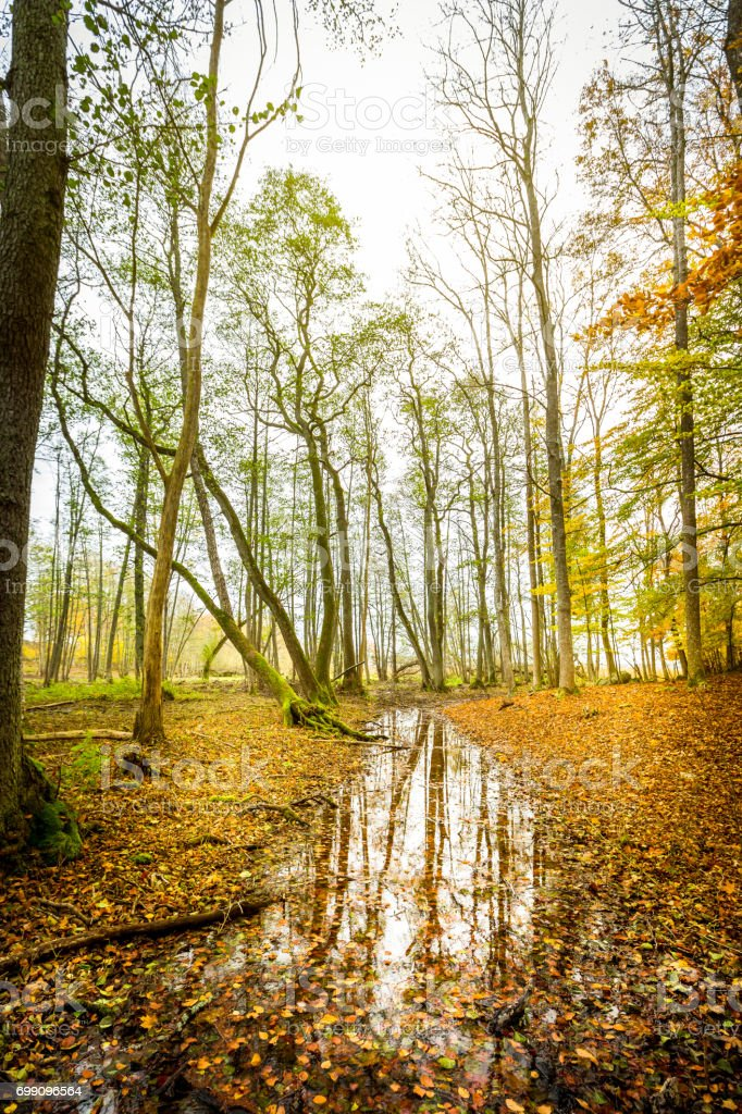 Beautiful misty autumn forest with vivid colors and water reflection. stock photo