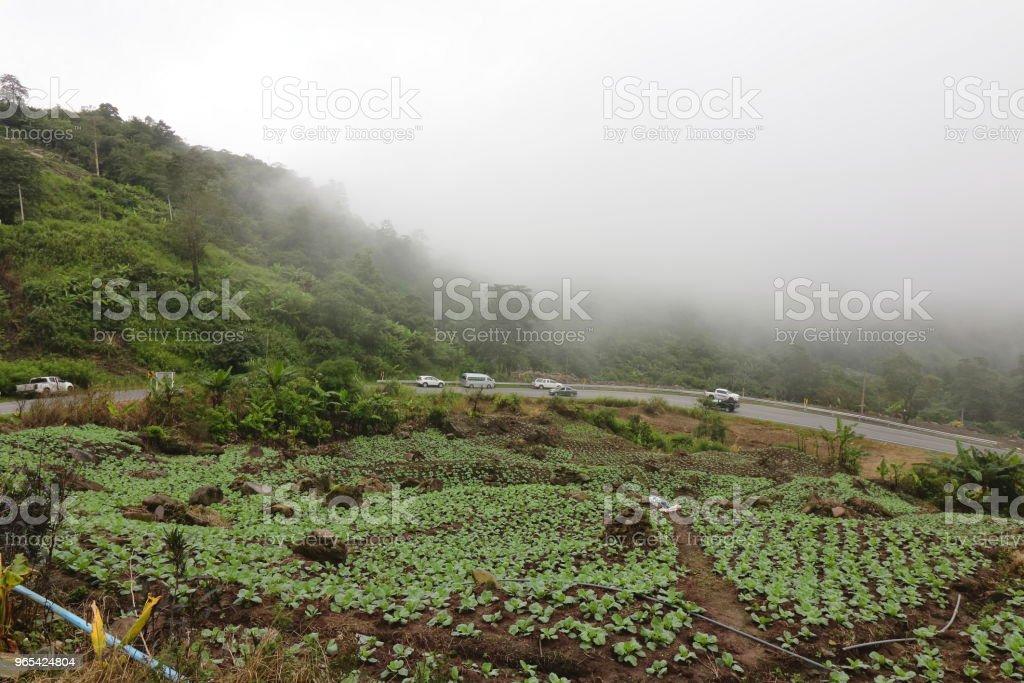Beautiful brumeux sur la ferme de chou sur la montagne - Photo de Agriculture libre de droits