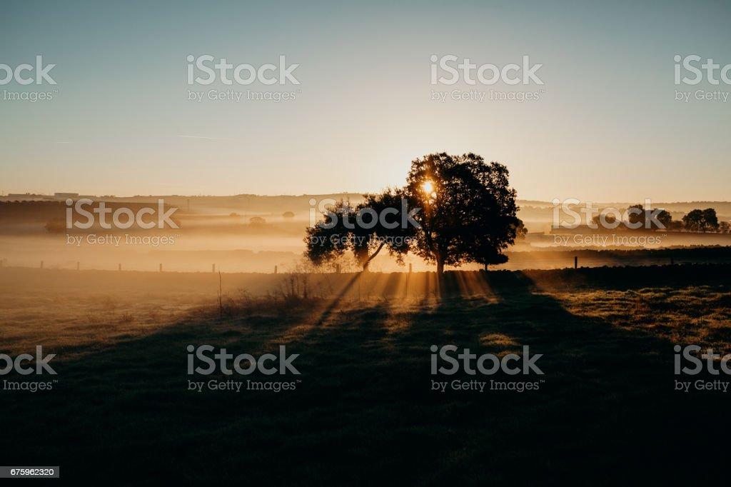 Beautiful misty rural landscape. Dawn light. stock photo