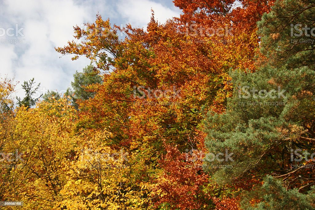 Beautiful mixed forest in autumn royalty-free stock photo