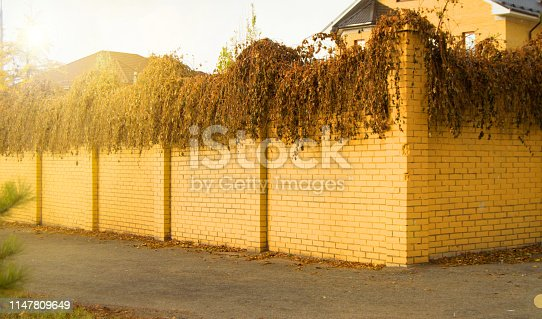 Beautiful modern fence made of yellow brick and curly dried-up plants on it in the autumn sunlight.