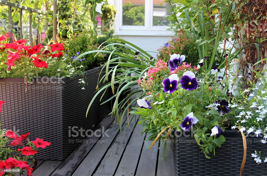 Beautiful modern terrace with mix of summer flowers stock photo