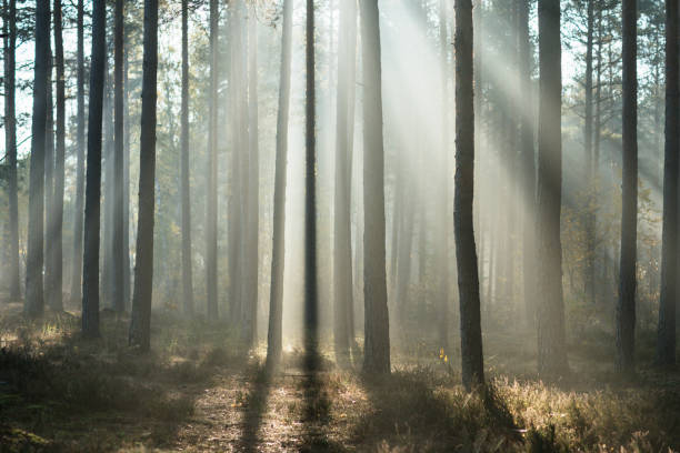 Beautiful morning in the forest stock photo