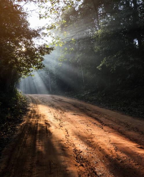 paisagem linda manhã de floresta de pista de terra com raios de sol - estrada em terra batida - fotografias e filmes do acervo