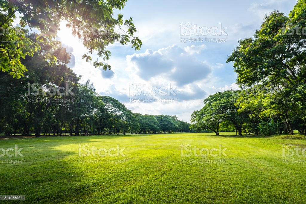 Beautiful morning light in public park with green grass field stock photo