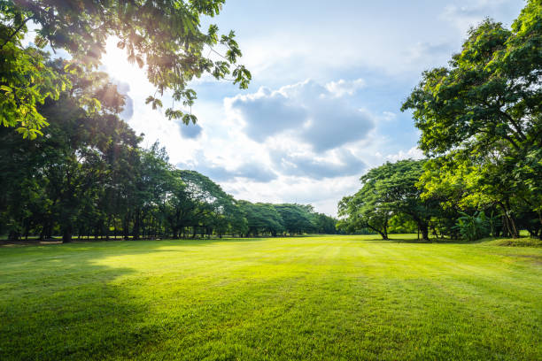 beautiful morning light in public park with green grass field - public park stock photos and pictures