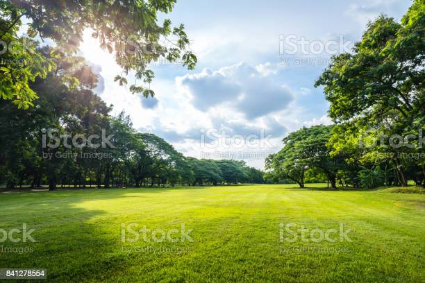 Photo of Beautiful morning light in public park with green grass field