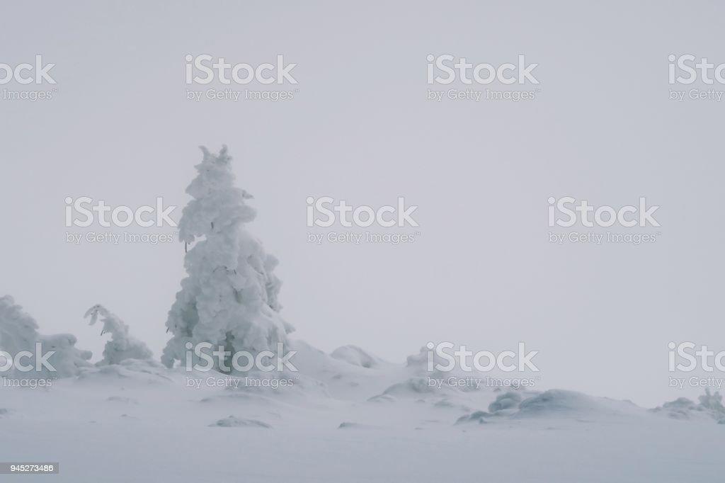 Schönen Guten Morgen Bergblick Stockfoto Und Mehr Bilder Von