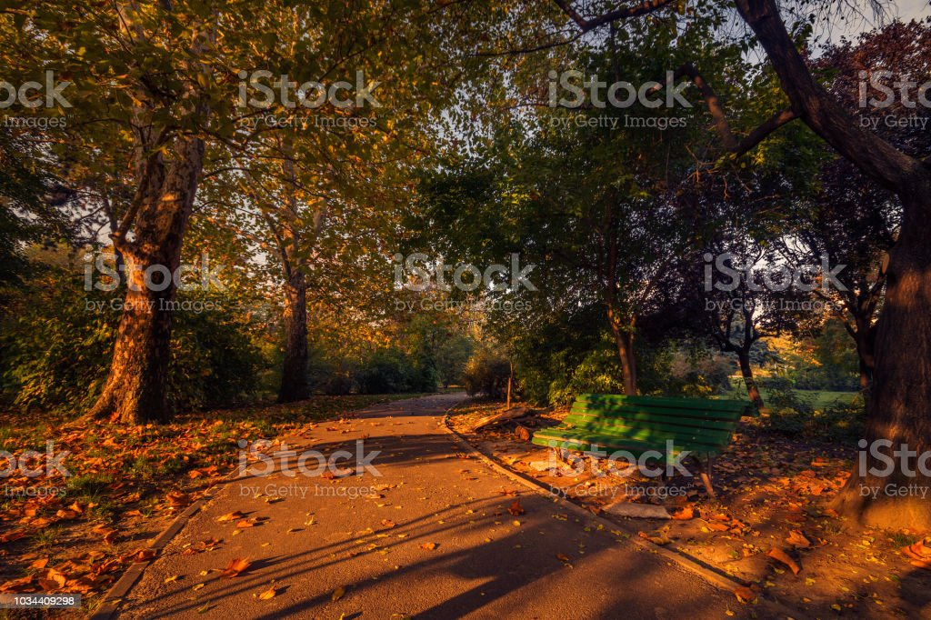 Beautiful morning scene in autumn season in the park near a bench with a leaves carpet on the ground stock photo