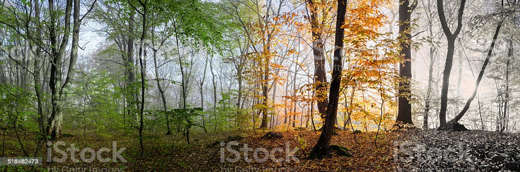 Beautiful morning scene, wood panorama changing 4 seasons stock photo