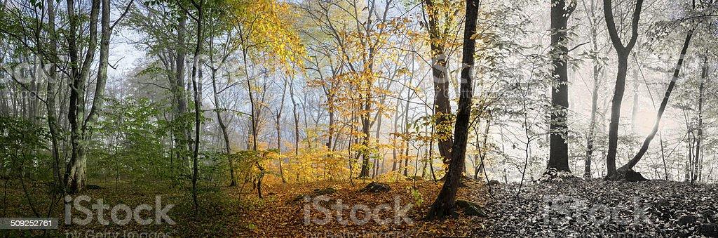 Beautiful morning scene, wood panorama changing seasons stock photo