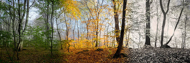 beautiful morning scene, wood panorama changing seasons - four seasons stock photos and pictures