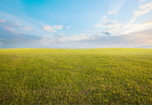 beautiful morning sky and empty green grass use as background backdrop beautiful morning sky and empty green grass use as background backdrop grounds stock pictures, royalty-free photos & images