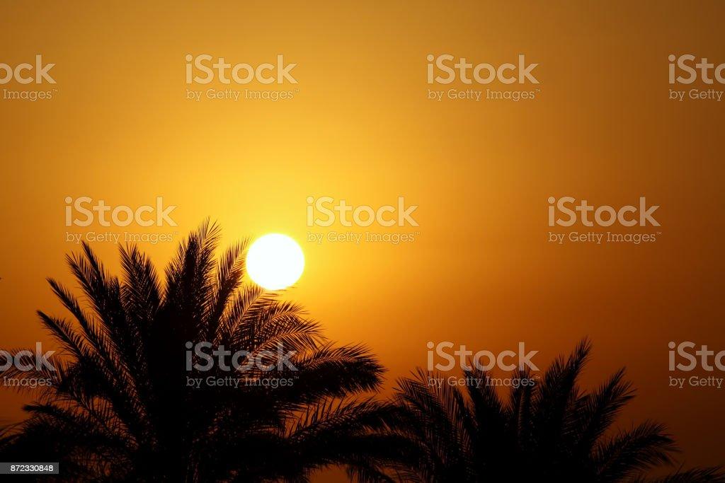 Schönen Guten Morgen Sonne Und Palmen Bäume Stockfoto Und