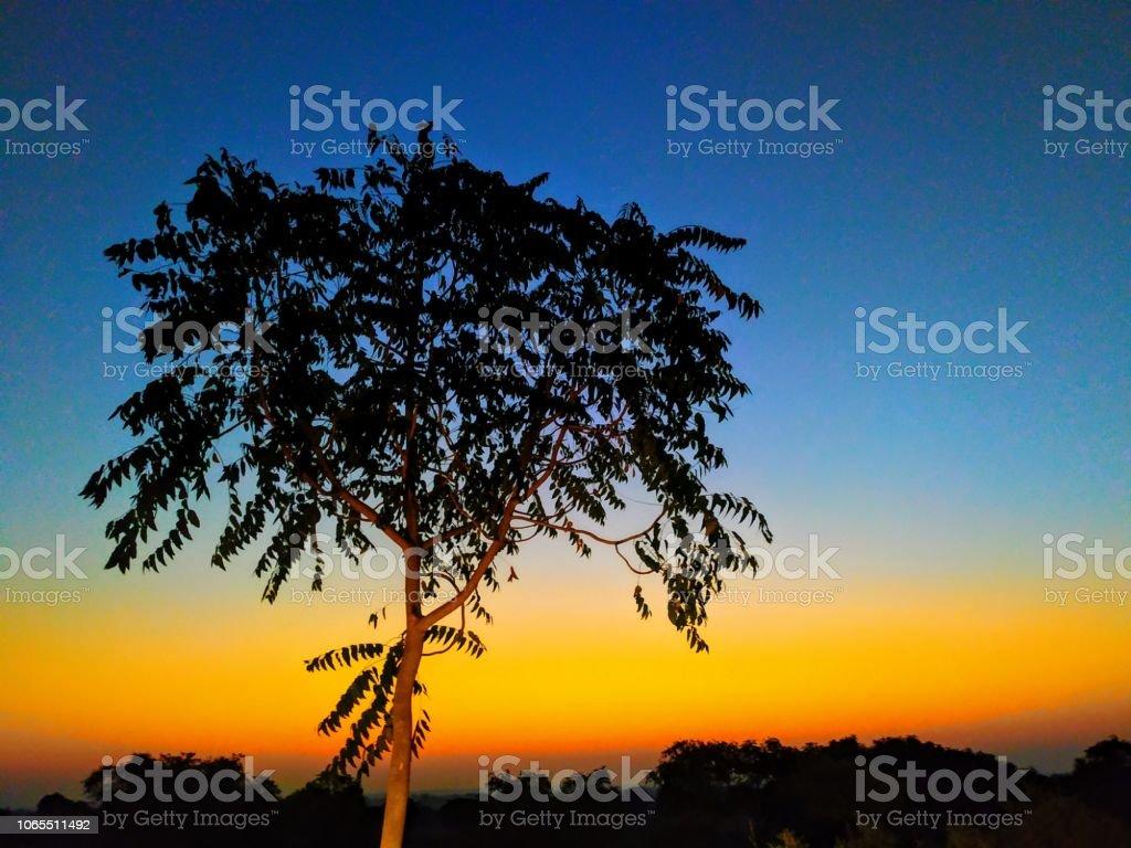 Schönen Guten Morgen Sonnenaufgang Im Wald Auf Der Suche