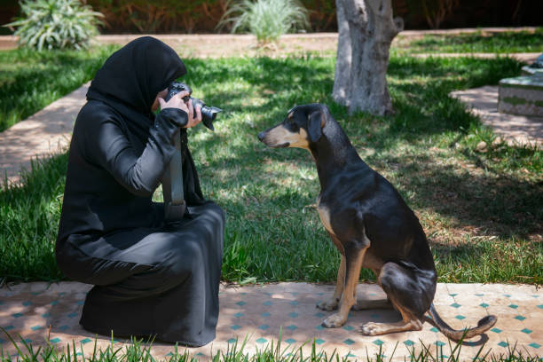 Beautiful Moroccan Arab muslim woman with traditional black niqab, photographs an obedient young Sloughi dog (Arabian greyhound) stock photo