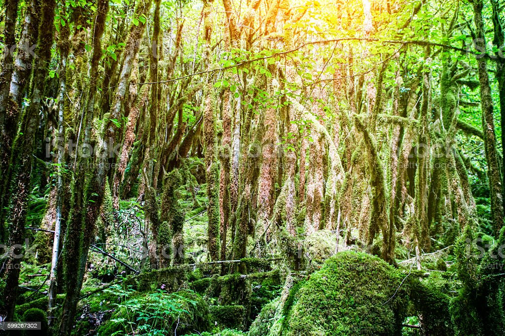 Beautiful moss growing on trees under sunlight in wetland woods stock photo