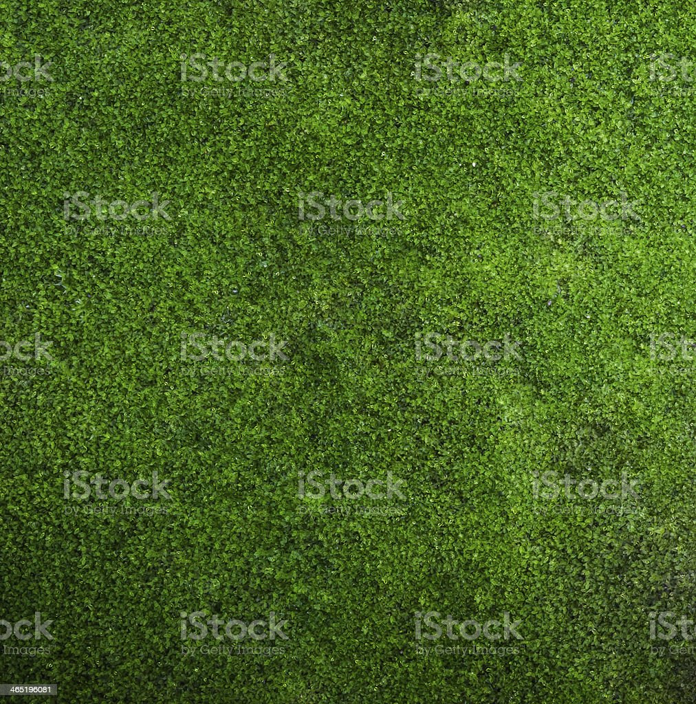 beautiful moss stock photo