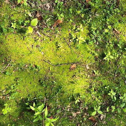 Beautiful Mossy Green Ground