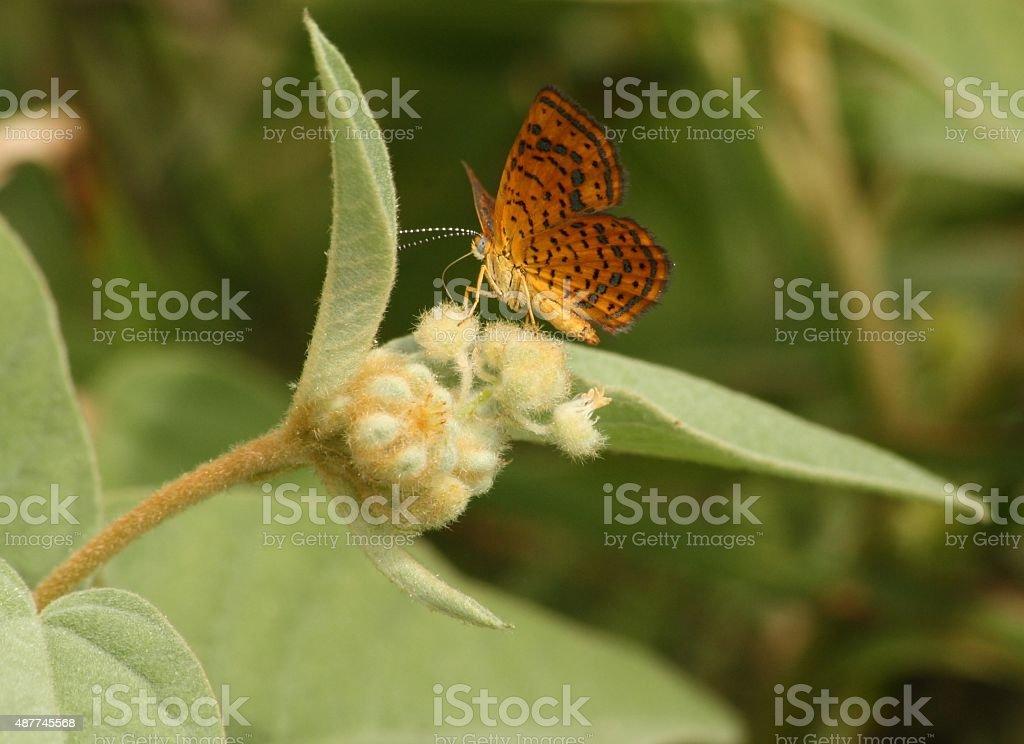 Beau papillon sur duveteux plant photo libre de droits