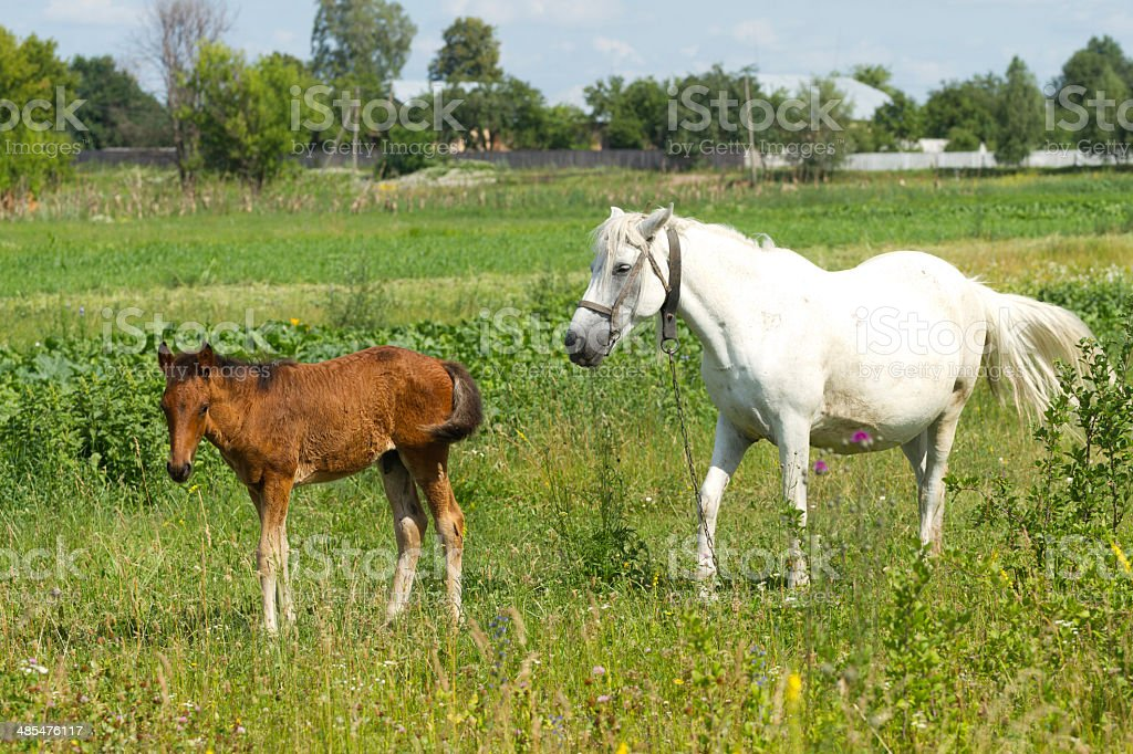 Beautiful Mother And Baby Horse Stock Photo Download Image Now Istock