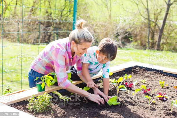 Beautiful mother and her blond son planting salad in the raised bed picture id979162866?b=1&k=6&m=979162866&s=612x612&h=hwaosm91kk i6jxahqojkiognzorgjjsb5x8 md1pss=