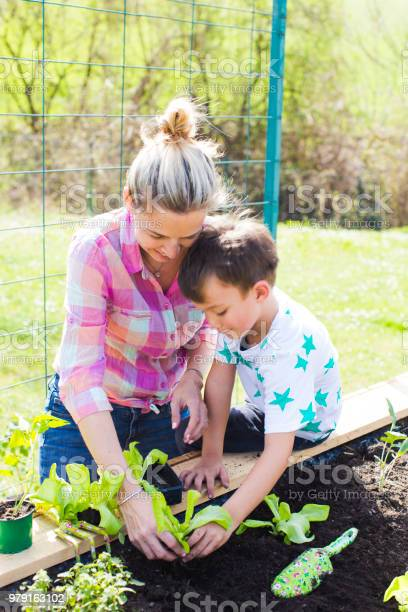 Beautiful mother and her blond son planting salad in the raised bed picture id979163102?b=1&k=6&m=979163102&s=612x612&h=ptuzap ch7 a4i46mcopg 7n1fcqbrhjtpqtvqyv1ou=