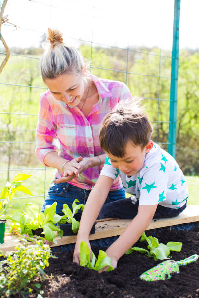 schöne Mutter und ihren blonden Sohn Salat in das Hochbeet in ihrem Garten Pflanzen – Foto