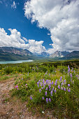 Beautiful Mountain and wild flowers in summer in Glacier National Park, Montana