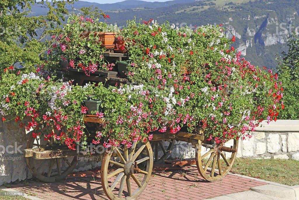 beautiful mountain flower cart with many Geraniums and other flo royalty-free stock photo