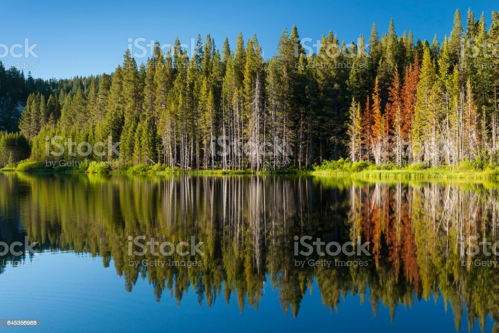 Beautiful mountain lake with tree line and reflections in the Tahoe Basin stock photo