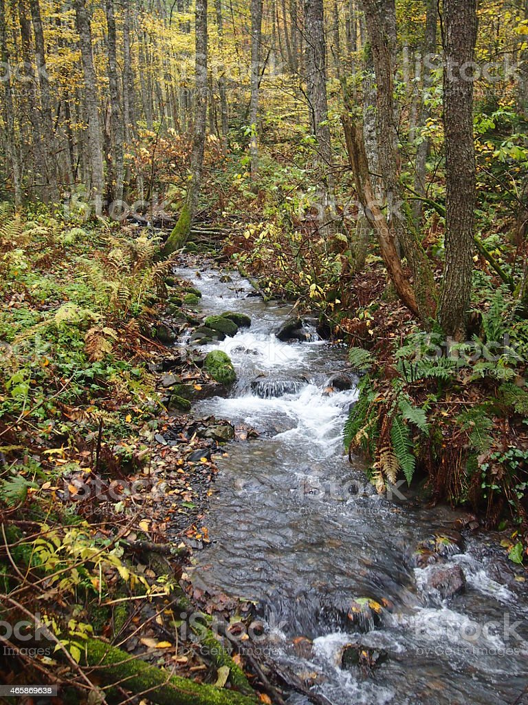 Beautiful mountain river stock photo
