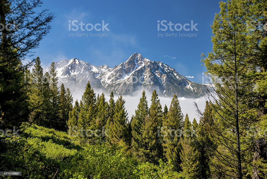 Beautiful mountains and a forest stock photo