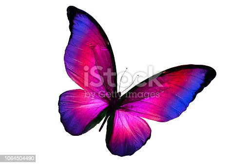 multicolor butterfly isolated on white background