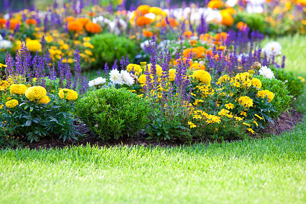 Beautiful multicolored flowerbed on green lawn multicolored flowerbed on a lawn. horizontal shot. small GRIP perennial stock pictures, royalty-free photos & images